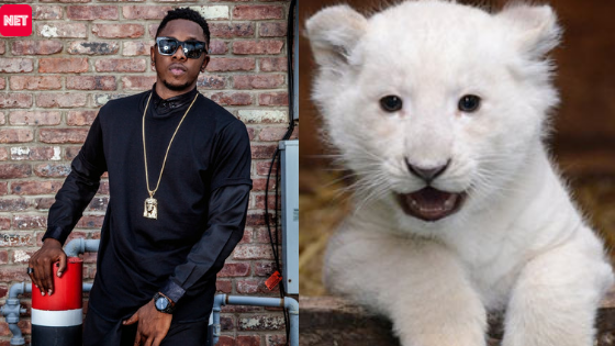 Runtown Faces One Year Jail Term If Arraigned For Acquiring Pet Lion